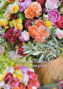 Copyright-Meilland-Nederland Parfums de Provence Roses from your garden