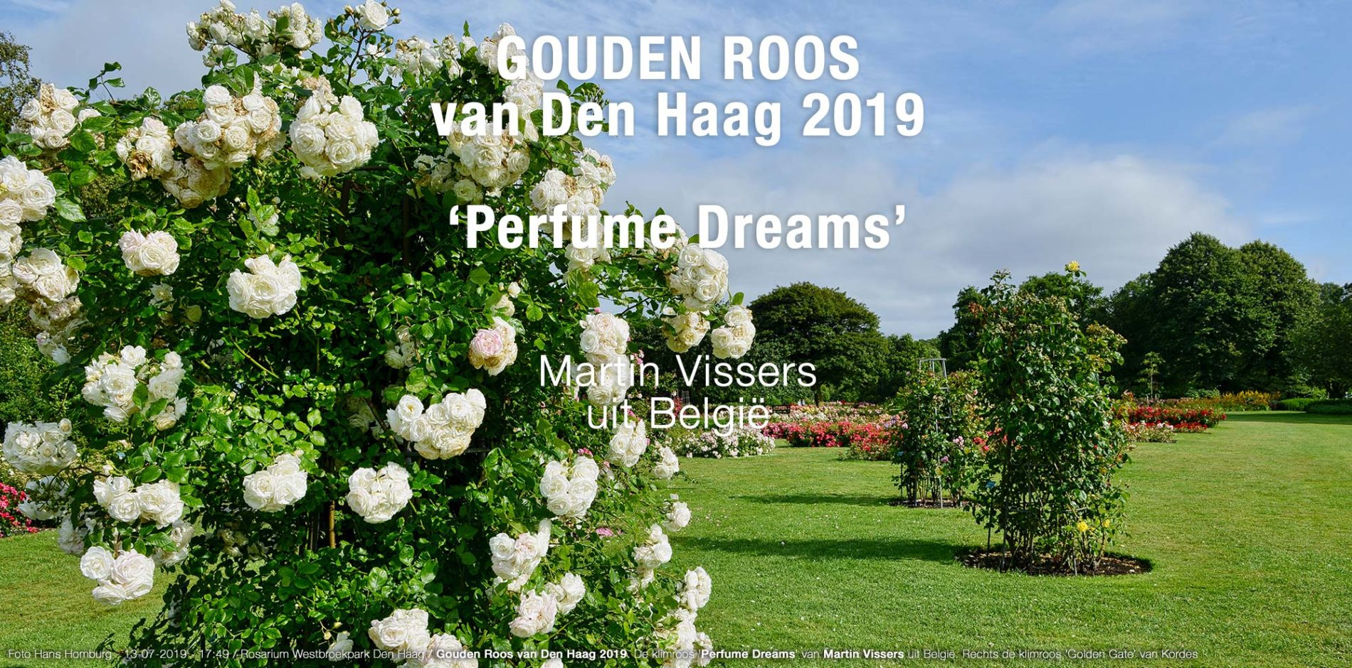 Verslag Dag van de Roos – follow your dreams