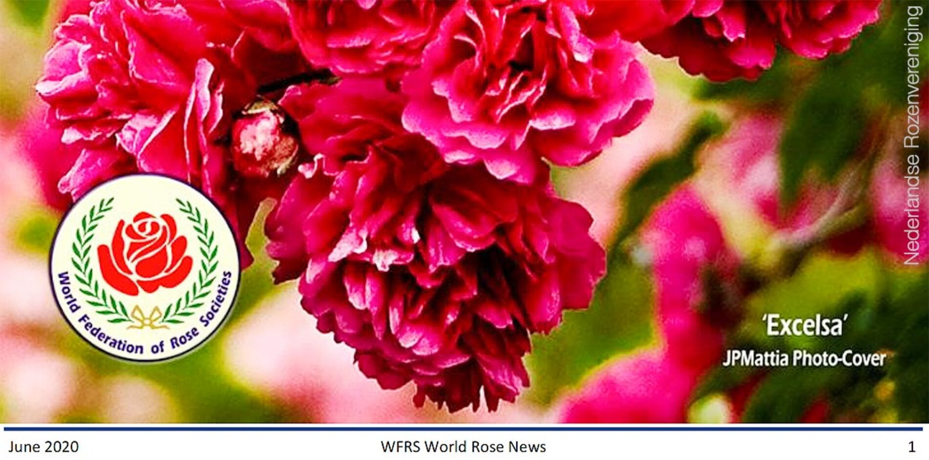 World Rose News juni 2020